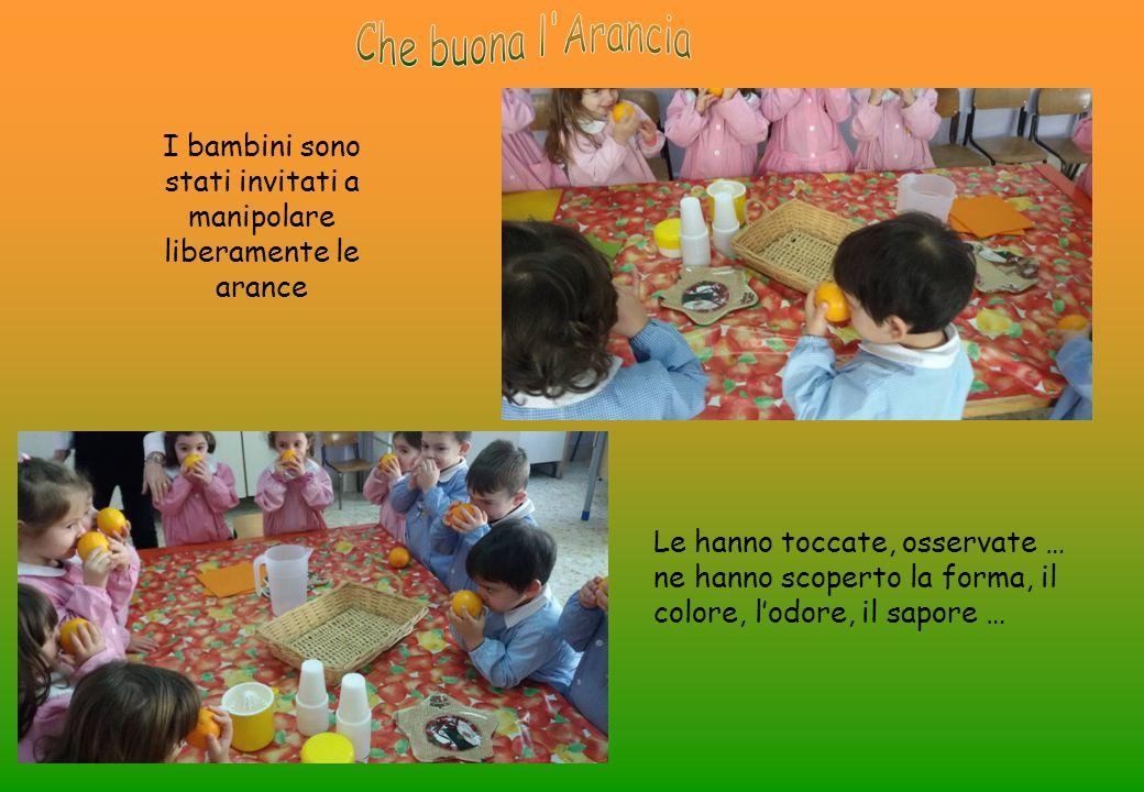 I bambini sono stati invitati a manipolare liberamente le arance Le hanno toccate, osservate … ne hanno scoperto la forma, il colore, l'odore, il sapore …