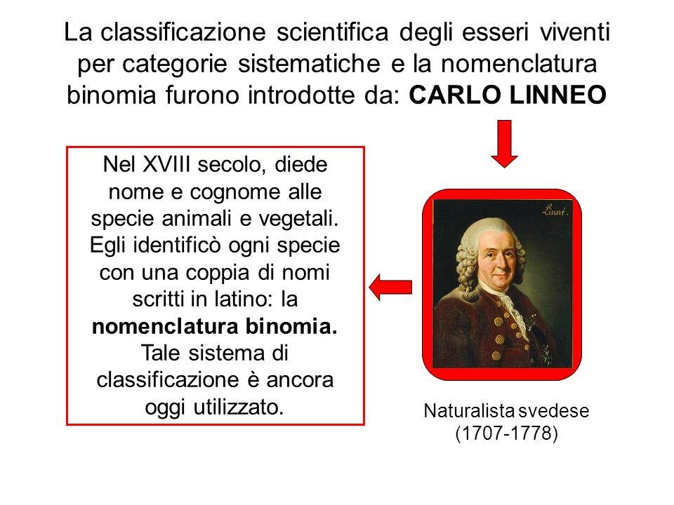 La classificazione scientifica degli esseri viventi per categorie sistematiche e la nomenclatura binomia furono introdotte da: CARLO LINNEO Nel XVIII