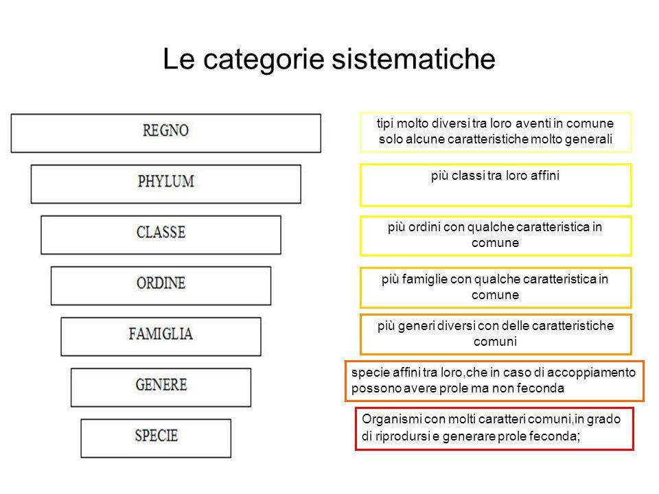 Le categorie sistematiche Organismi con molti caratteri comuni,in grado di riprodursi e generare prole feconda ; specie affini tra loro,che in caso di