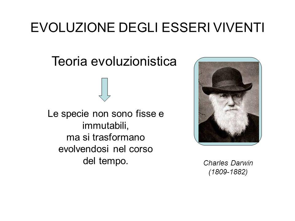 EVOLUZIONE DEGLI ESSERI VIVENTI Teoria evoluzionistica Charles Darwin (1809-1882) Le specie non sono fisse e immutabili, ma si trasformano evolvendosi