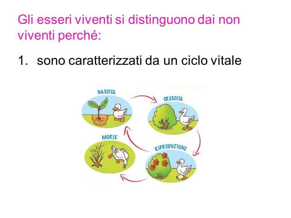 Gli esseri viventi si distinguono dai non viventi perché: 1.sono caratterizzati da un ciclo vitale