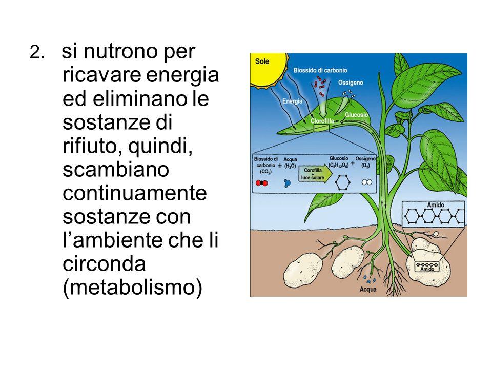 2. si nutrono per ricavare energia ed eliminano le sostanze di rifiuto, quindi, scambiano continuamente sostanze con l'ambiente che li circonda (metab