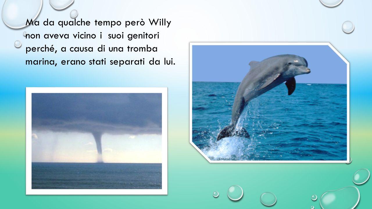C'era una volta Willy, un bellissimo giovane delfino di otto anni.