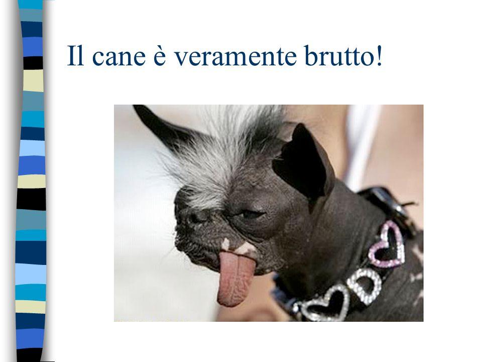 Il cane è veramente brutto!