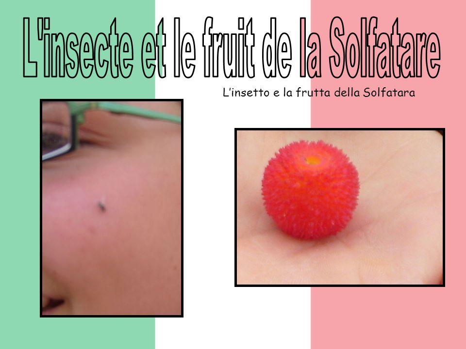 Linsetto e la frutta della Solfatara