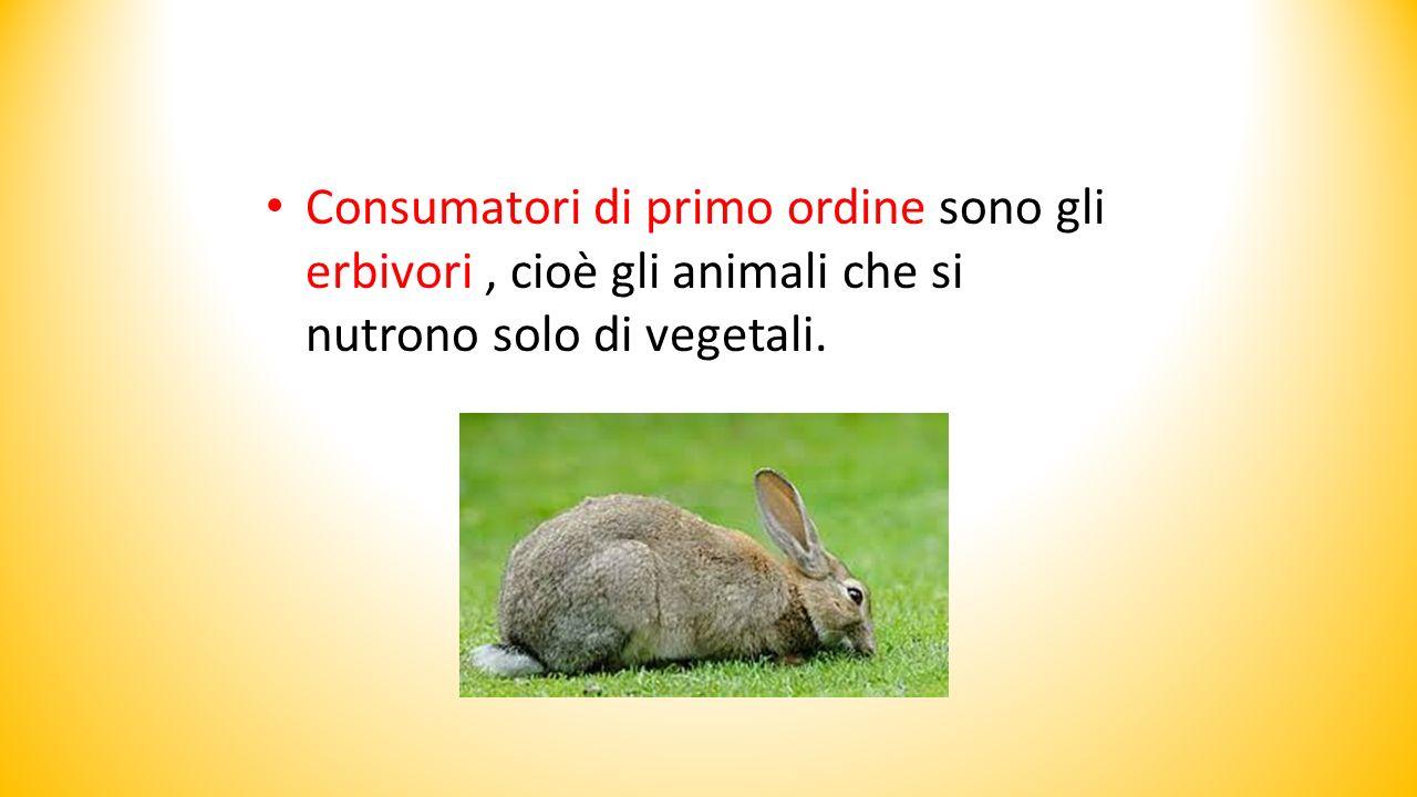 Consumatori di primo ordine sono gli erbivori, cioè gli animali che si nutrono solo di vegetali.