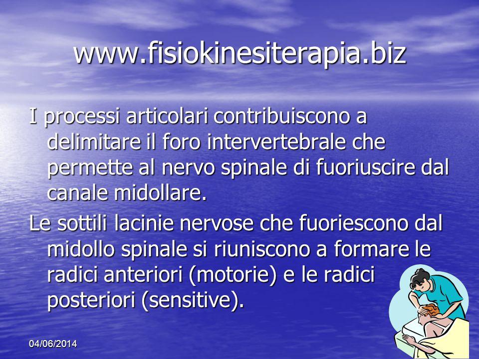 04/06/201412 www.fisiokinesiterapia.biz I processi articolari contribuiscono a delimitare il foro intervertebrale che permette al nervo spinale di fuo