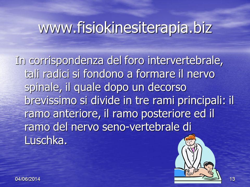 04/06/201413 www.fisiokinesiterapia.biz In corrispondenza del foro intervertebrale, tali radici si fondono a formare il nervo spinale, il quale dopo u