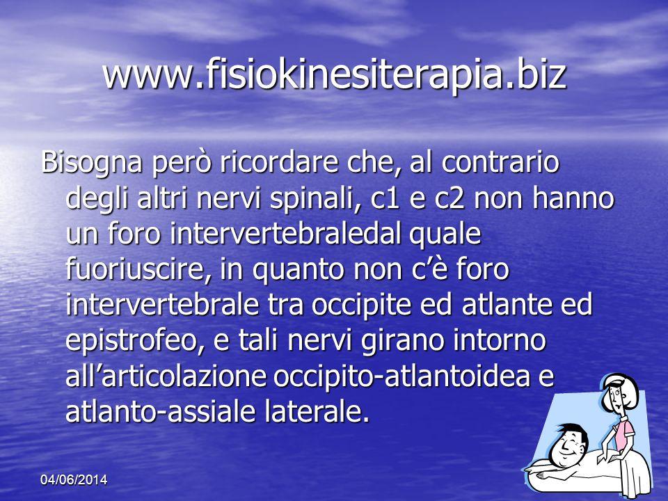 04/06/201414 www.fisiokinesiterapia.biz Bisogna però ricordare che, al contrario degli altri nervi spinali, c1 e c2 non hanno un foro intervertebraled