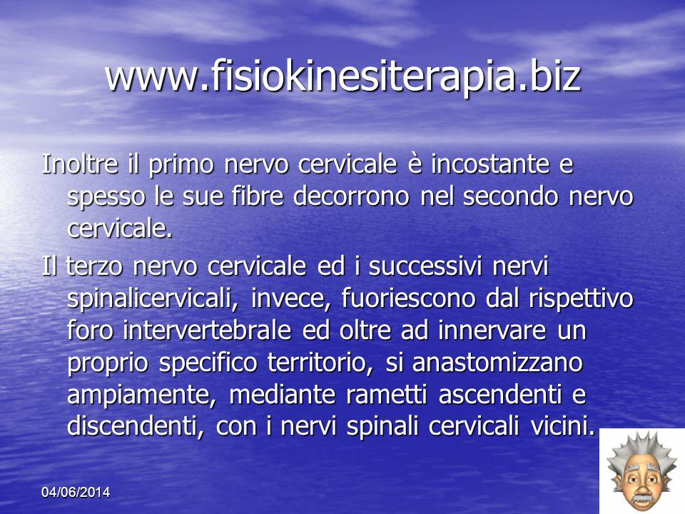 04/06/201415 www.fisiokinesiterapia.biz Inoltre il primo nervo cervicale è incostante e spesso le sue fibre decorrono nel secondo nervo cervicale. Il