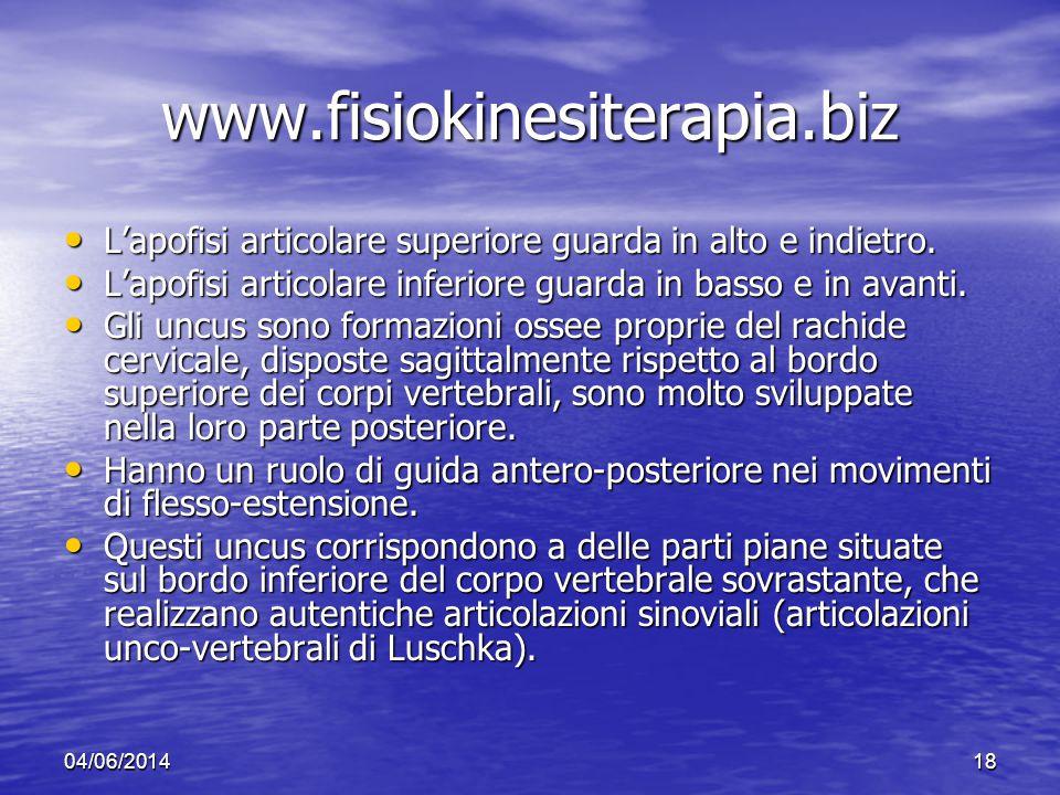 04/06/201418 www.fisiokinesiterapia.biz Lapofisi articolare superiore guarda in alto e indietro. Lapofisi articolare superiore guarda in alto e indiet
