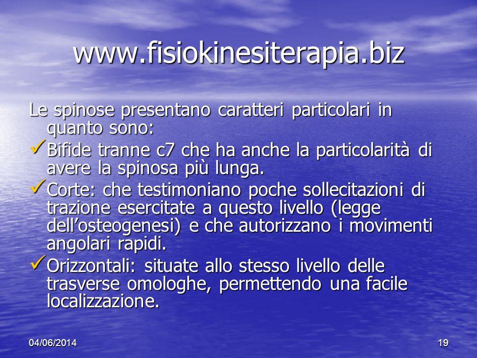 04/06/201419 www.fisiokinesiterapia.biz Le spinose presentano caratteri particolari in quanto sono: Bifide tranne c7 che ha anche la particolarità di