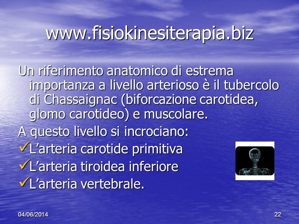 04/06/201422 www.fisiokinesiterapia.biz Un riferimento anatomico di estrema importanza a livello arterioso è il tubercolo di Chassaignac (biforcazione