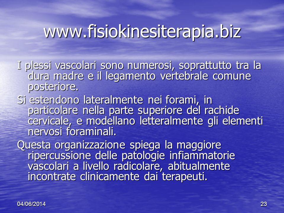 04/06/201423 www.fisiokinesiterapia.biz I plessi vascolari sono numerosi, soprattutto tra la dura madre e il legamento vertebrale comune posteriore. S