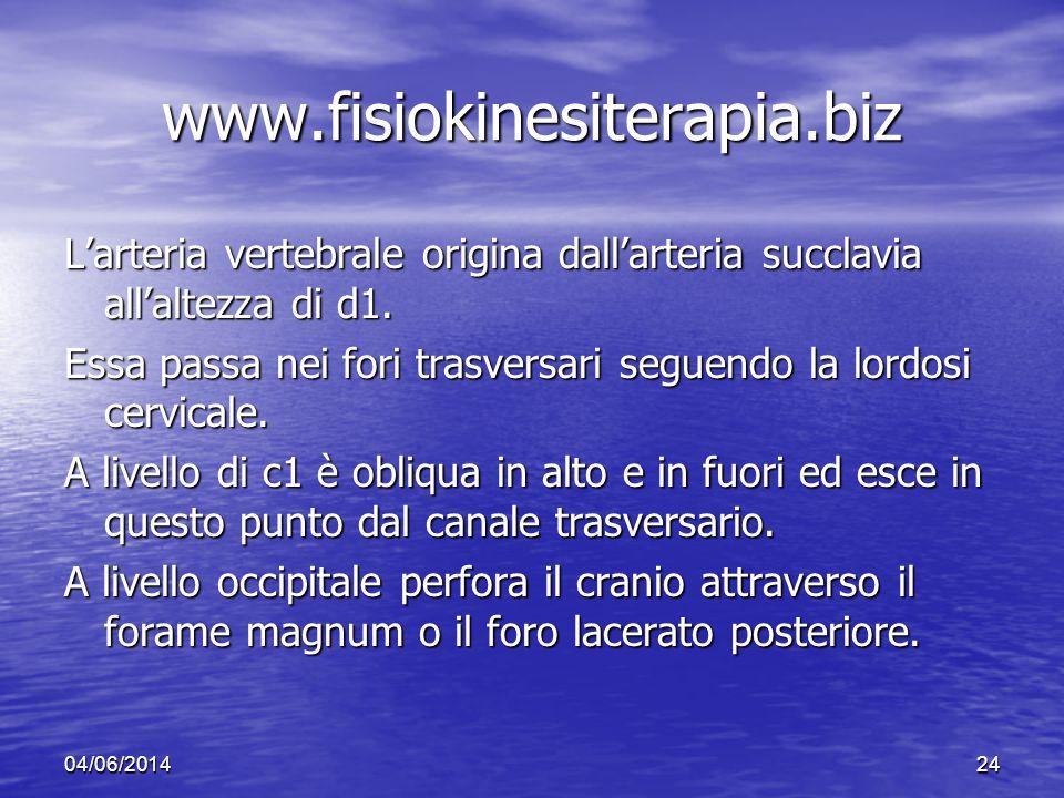04/06/201424 www.fisiokinesiterapia.biz Larteria vertebrale origina dallarteria succlavia allaltezza di d1. Essa passa nei fori trasversari seguendo l