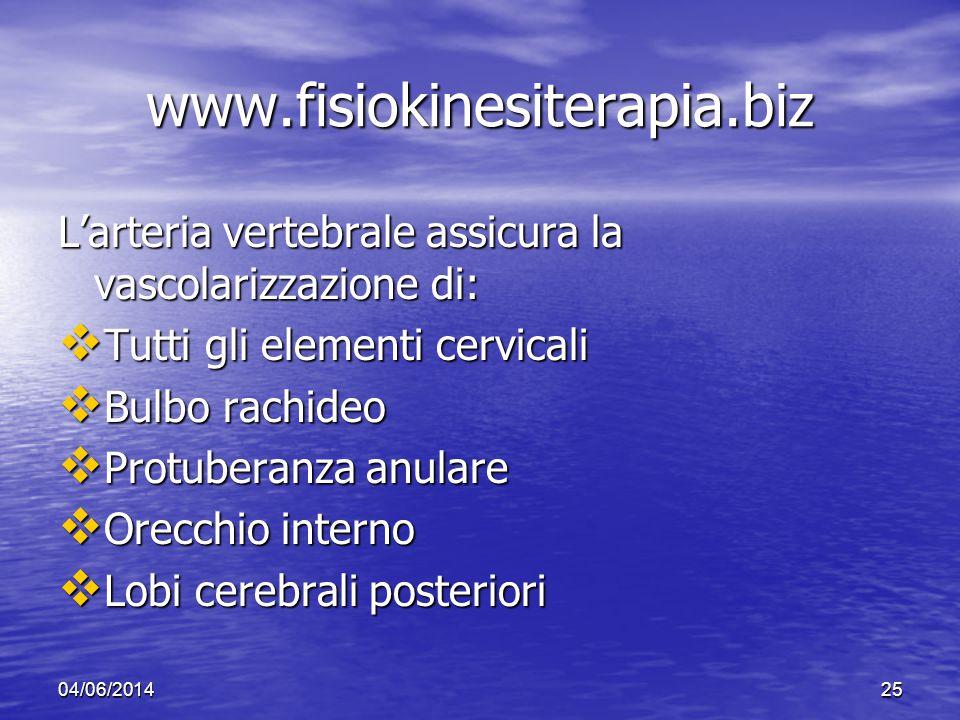 04/06/201425 www.fisiokinesiterapia.biz Larteria vertebrale assicura la vascolarizzazione di: Tutti gli elementi cervicali Tutti gli elementi cervical