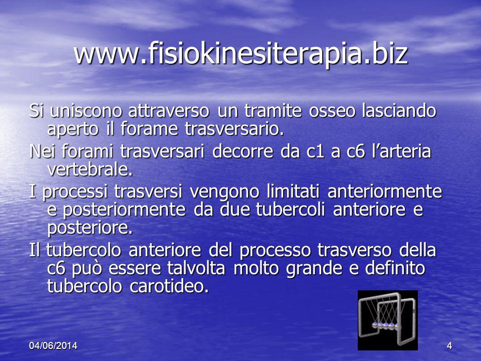 04/06/20144 www.fisiokinesiterapia.biz Si uniscono attraverso un tramite osseo lasciando aperto il forame trasversario. Nei forami trasversari decorre