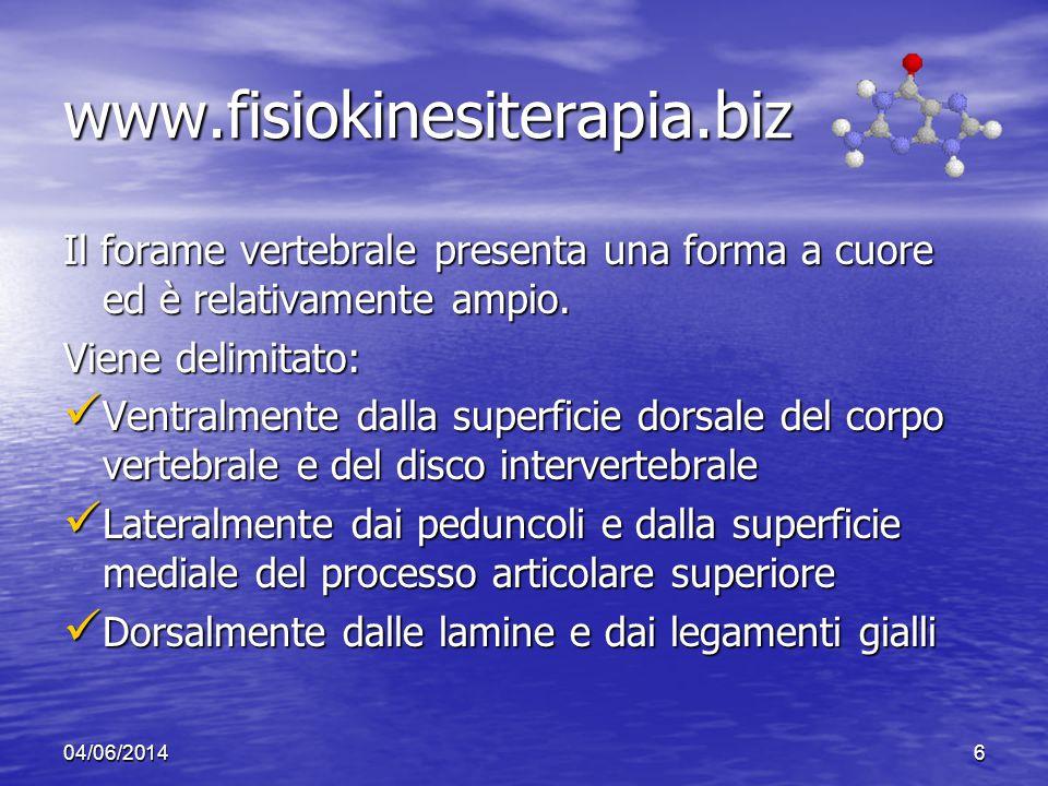 04/06/20146 www.fisiokinesiterapia.biz Il forame vertebrale presenta una forma a cuore ed è relativamente ampio. Viene delimitato: Ventralmente dalla