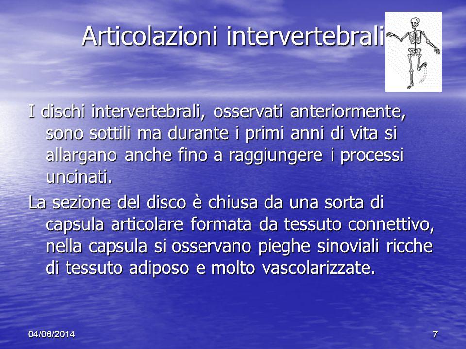 04/06/20147 Articolazioni intervertebrali I dischi intervertebrali, osservati anteriormente, sono sottili ma durante i primi anni di vita si allargano