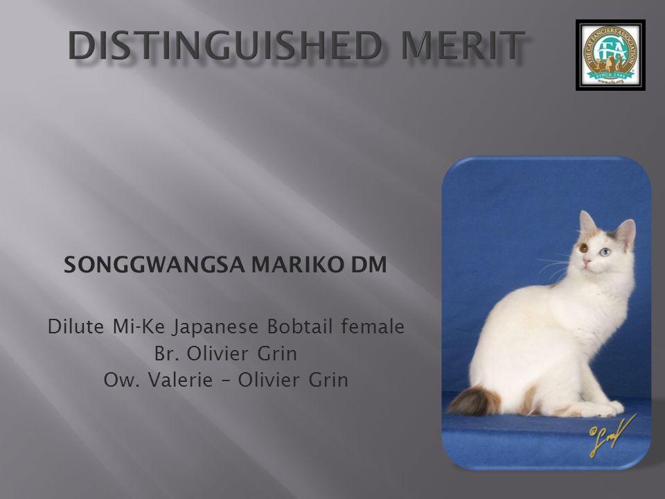 SONGGWANGSA MARIKO DM Dilute Mi-Ke Japanese Bobtail female Br.