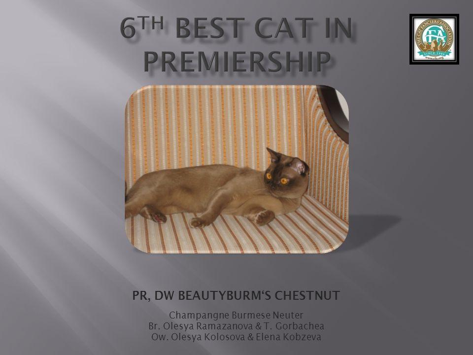 PR, DW BEAUTYBURMS CHESTNUT Champangne Burmese Neuter Br.