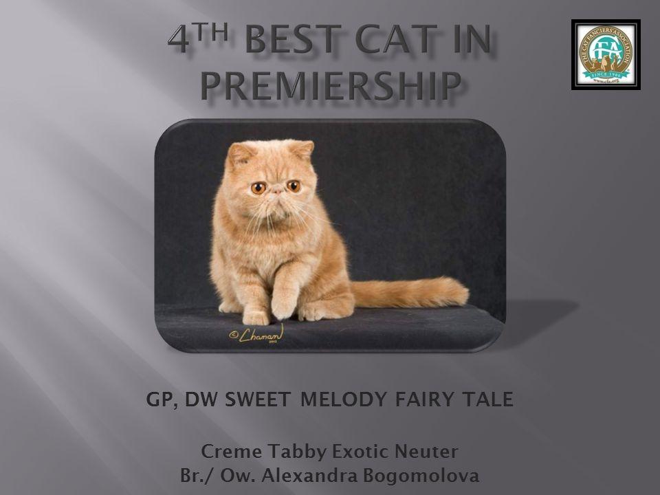 GP, DW SWEET MELODY FAIRY TALE Creme Tabby Exotic Neuter Br./ Ow. Alexandra Bogomolova