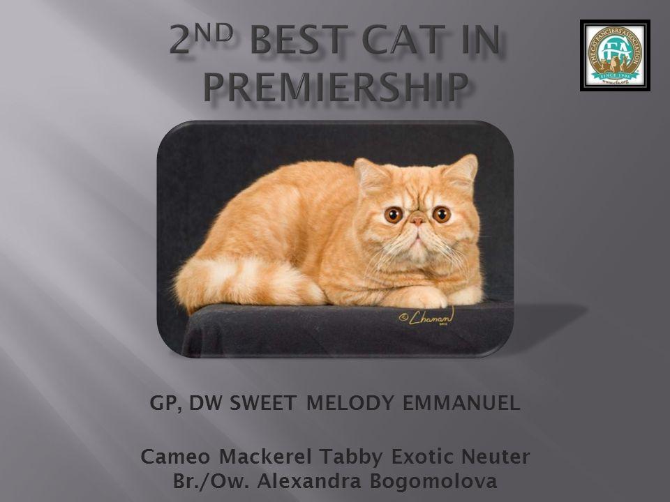 GP, DW SWEET MELODY EMMANUEL Cameo Mackerel Tabby Exotic Neuter Br./Ow. Alexandra Bogomolova