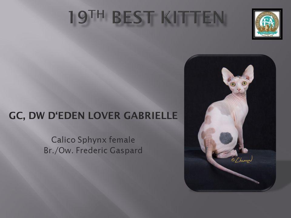 GC, DW DEDEN LOVER GABRIELLE Calico Sphynx female Br./Ow. Frederic Gaspard