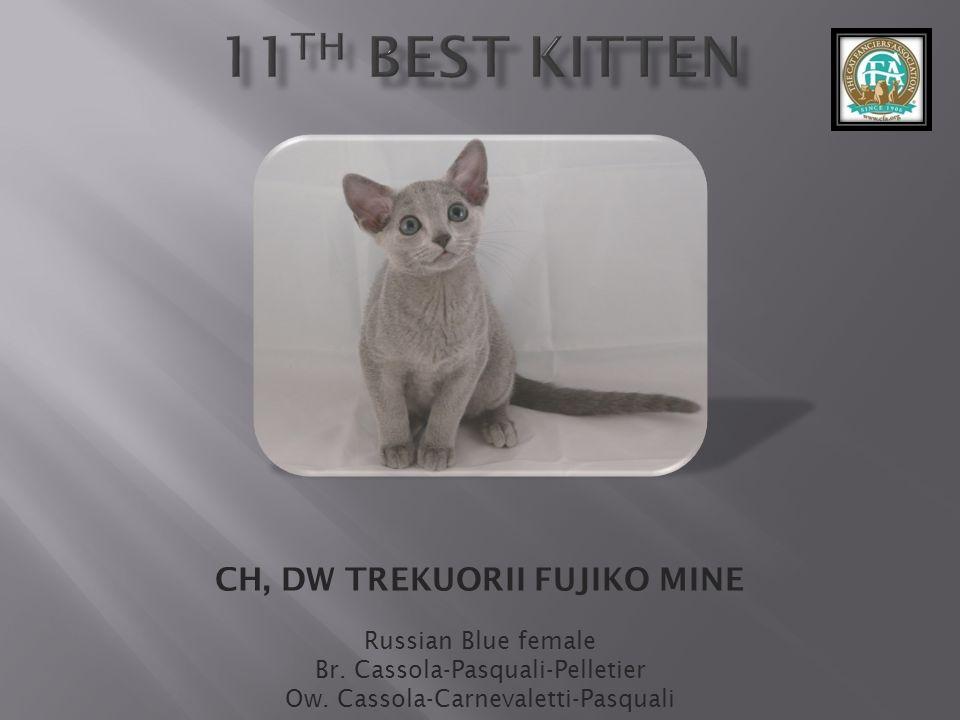 CH, DW TREKUORII FUJIKO MINE Russian Blue female Br.