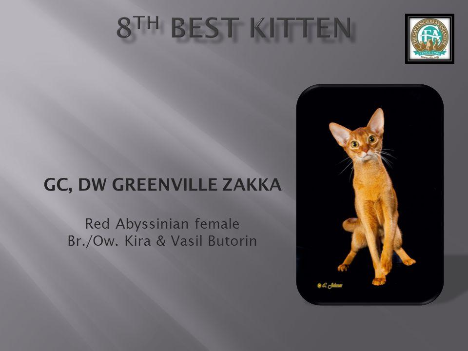 GC, DW GREENVILLE ZAKKA Red Abyssinian female Br./Ow. Kira & Vasil Butorin