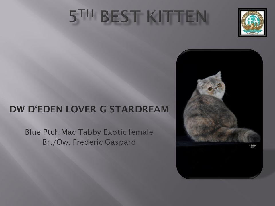 DW DEDEN LOVER G STARDREAM Blue Ptch Mac Tabby Exotic female Br./Ow. Frederic Gaspard