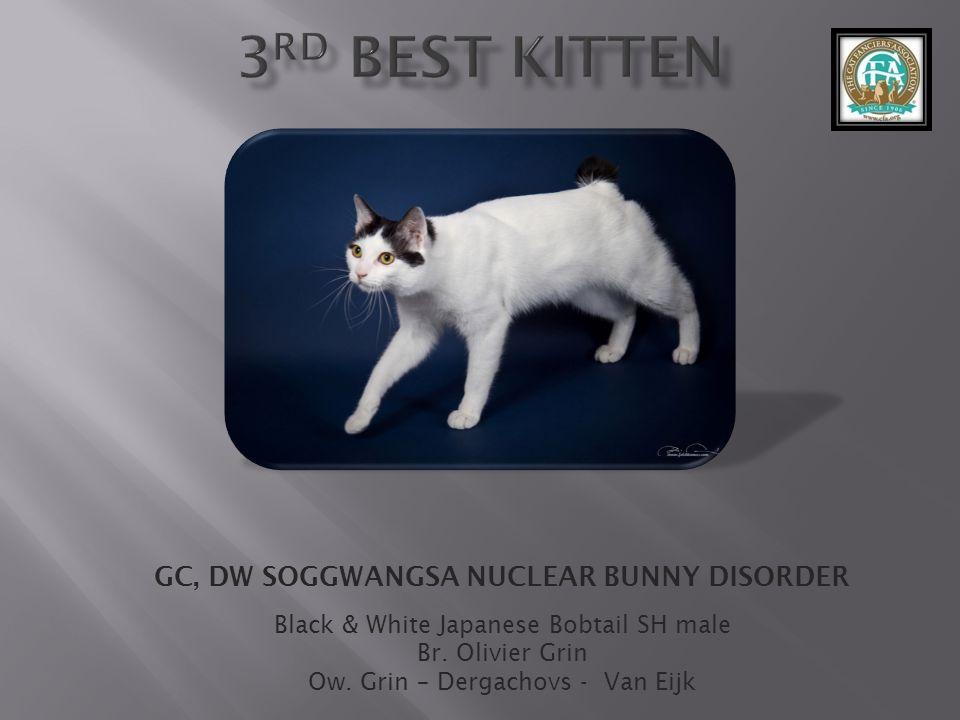 GC, DW SOGGWANGSA NUCLEAR BUNNY DISORDER Black & White Japanese Bobtail SH male Br.