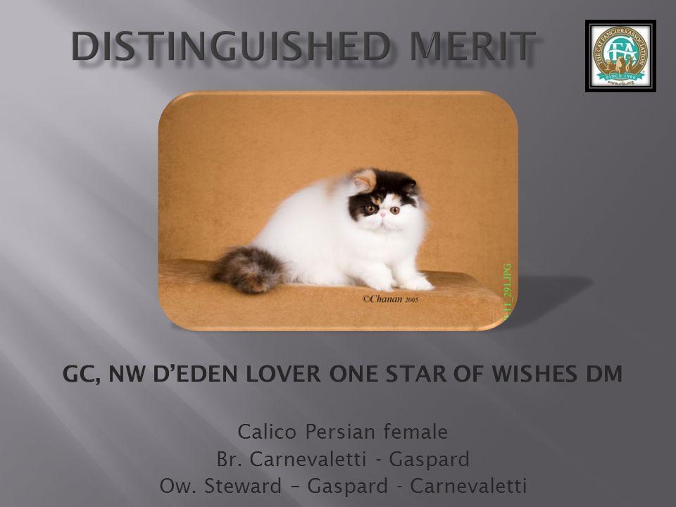 GC DEDEN LOVER TWINKLE STAR DM Cream-White Persian male Br.