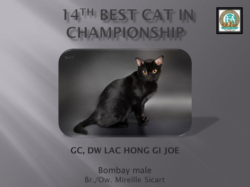 GC, DW LAC HONG GI JOE Bombay male Br./Ow. Mireille Sicart