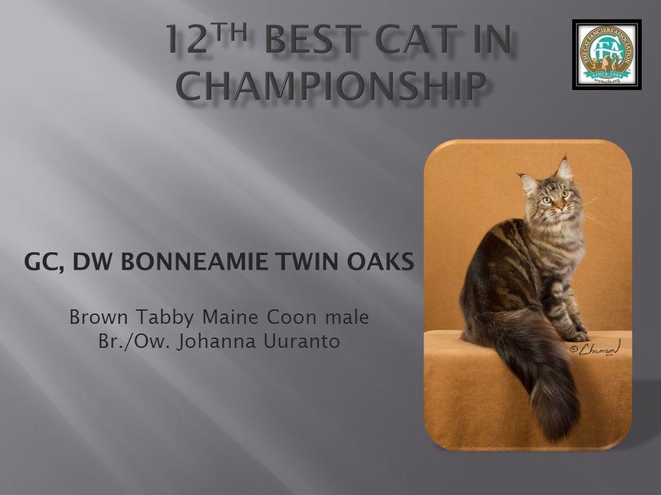 GC, DW BONNEAMIE TWIN OAKS Brown Tabby Maine Coon male Br./Ow. Johanna Uuranto