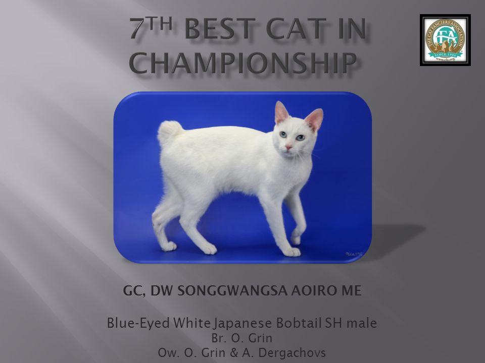 GC, DW SONGGWANGSA AOIRO ME Blue-Eyed White Japanese Bobtail SH male Br.