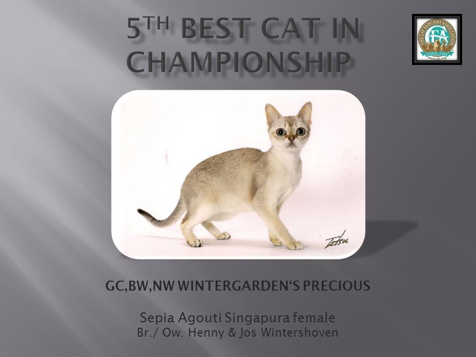 GC,BW,NW WINTERGARDENS PRECIOUS Sepia Agouti Singapura female Br./ Ow. Henny & Jos Wintershoven