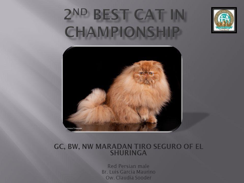 GC, BW, NW MARADAN TIRO SEGURO OF EL SHURINGA Red Persian male Br.
