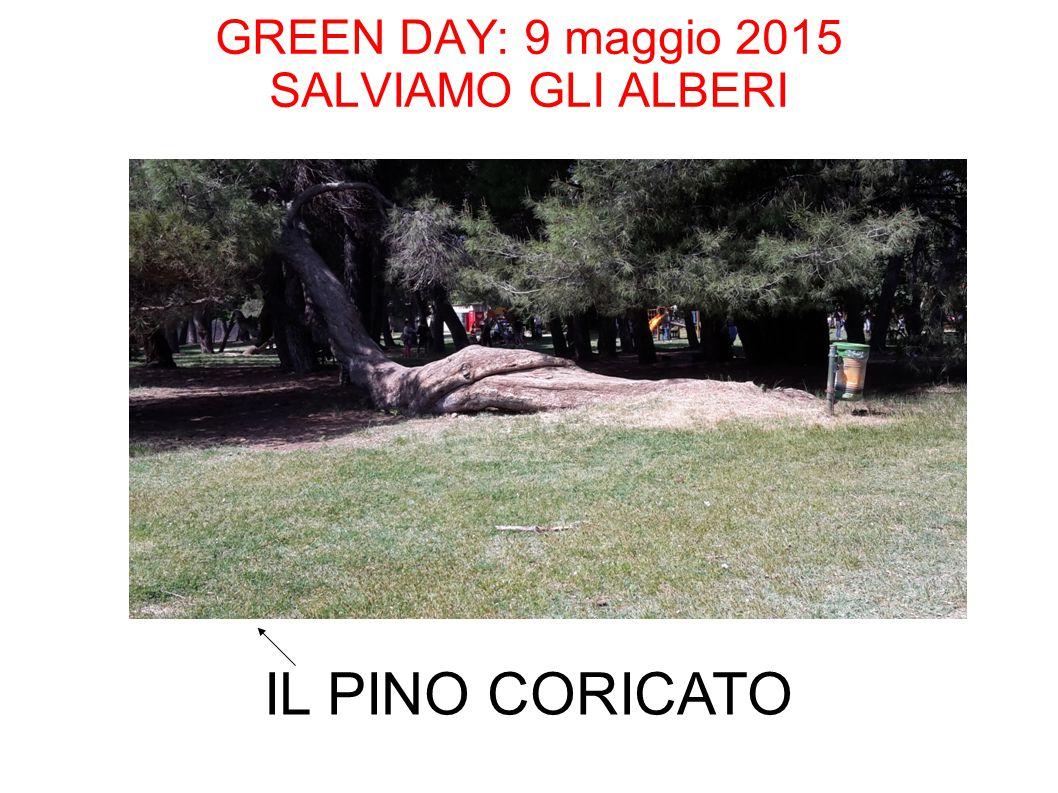 GREEN DAY: 9 maggio 2015 SALVIAMO GLI ALBERI IL PINO CORICATO