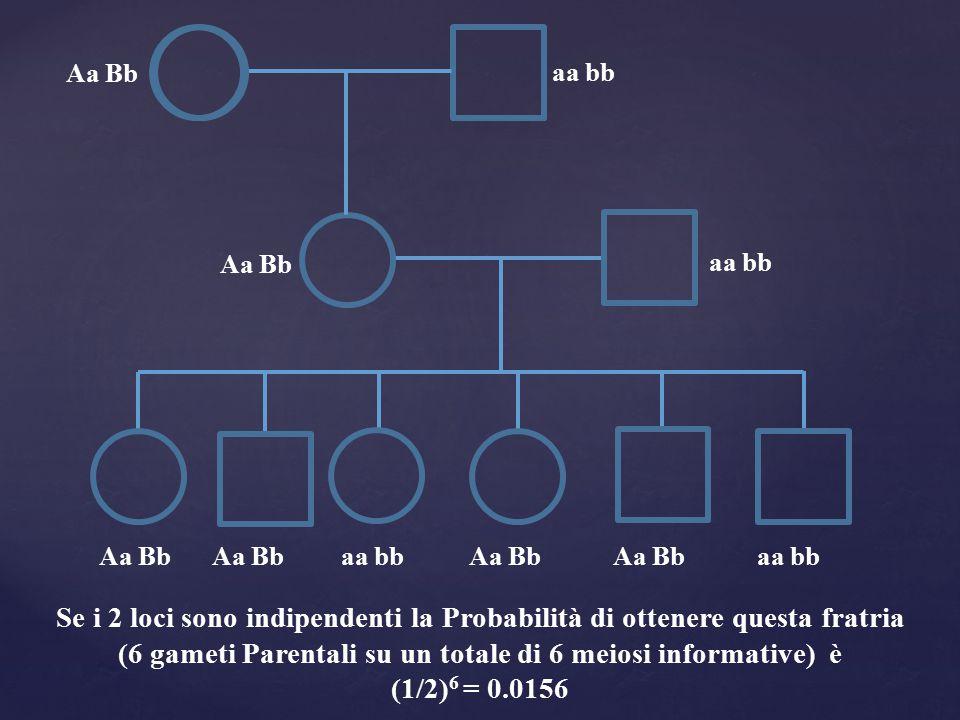 Aa Bb aa bb Aa Bb aa bb Se i 2 loci sono indipendenti la Probabilità di ottenere questa fratria (6 gameti Parentali su un totale di 6 meiosi informati