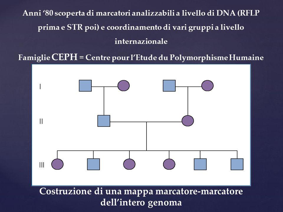 Anni '80 scoperta di marcatori analizzabili a livello di DNA (RFLP prima e STR poi) e coordinamento di vari gruppi a livello internazionale Famiglie C