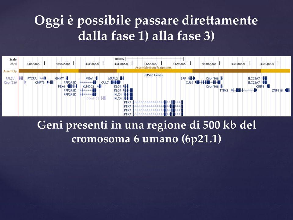 Oggi è possibile passare direttamente dalla fase 1) alla fase 3) Geni presenti in una regione di 500 kb del cromosoma 6 umano (6p21.1)