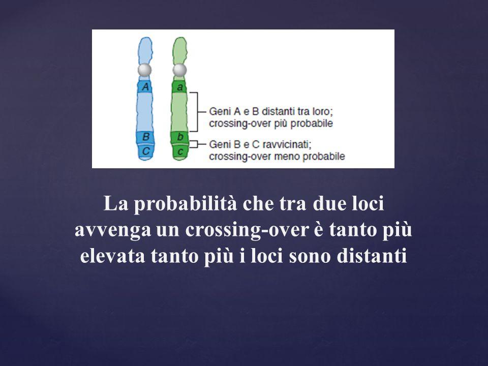 La probabilità che tra due loci avvenga un crossing-over è tanto più elevata tanto più i loci sono distanti