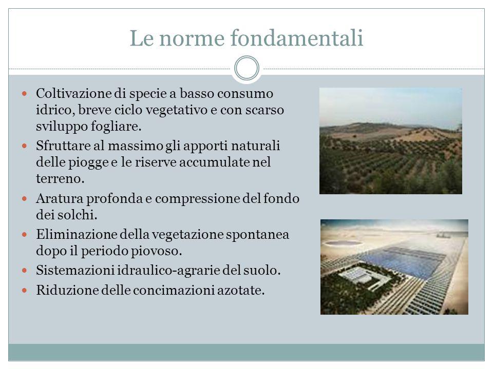 Le norme fondamentali Coltivazione di specie a basso consumo idrico, breve ciclo vegetativo e con scarso sviluppo fogliare.