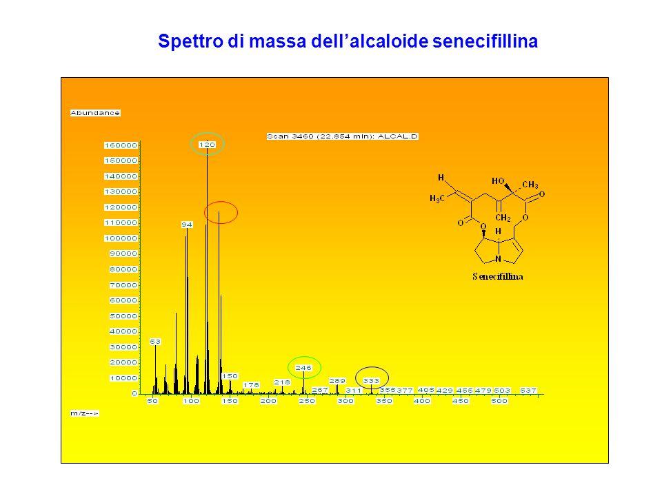 Spettro di massa dell'alcaloide senecifillina