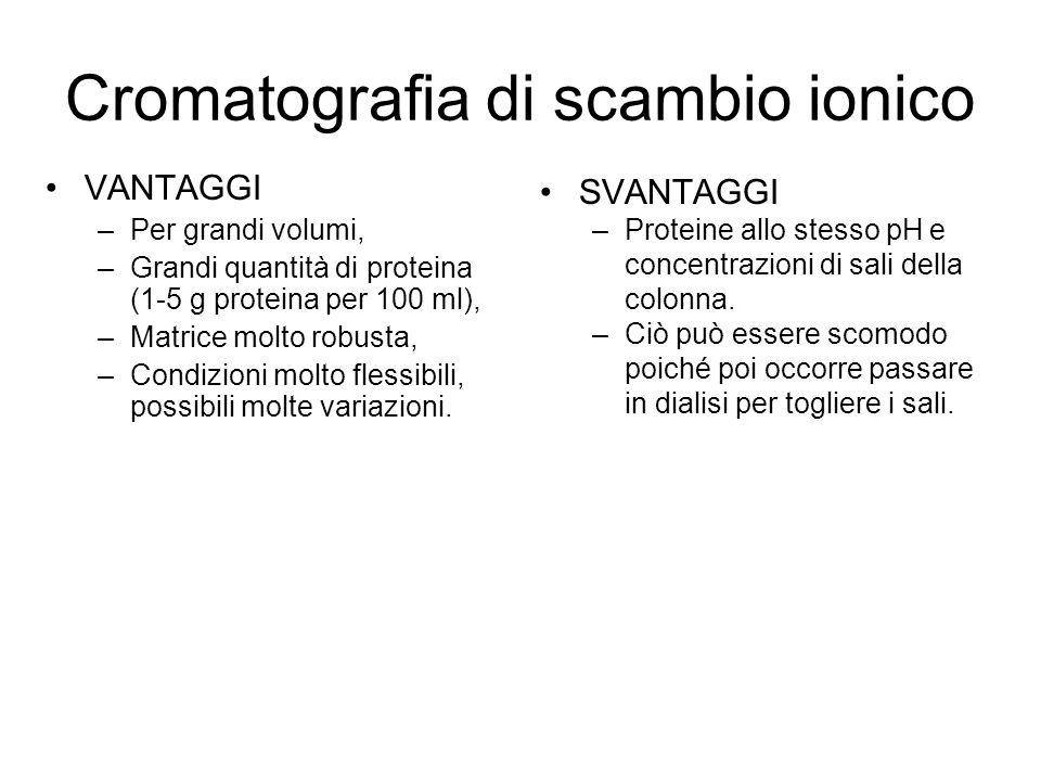 VANTAGGI –Per grandi volumi, –Grandi quantità di proteina (1-5 g proteina per 100 ml), –Matrice molto robusta, –Condizioni molto flessibili, possibili molte variazioni.