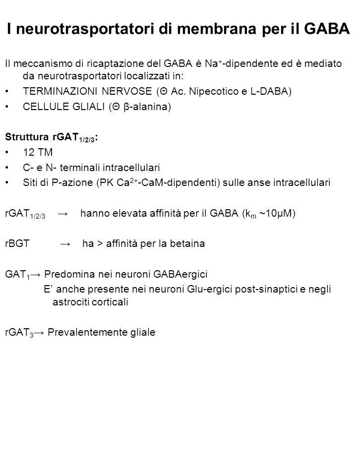 I neurotrasportatori di membrana per il GABA Il meccanismo di ricaptazione del GABA è Na + -dipendente ed è mediato da neurotrasportatori localizzati in: TERMINAZIONI NERVOSE (Θ Ac.