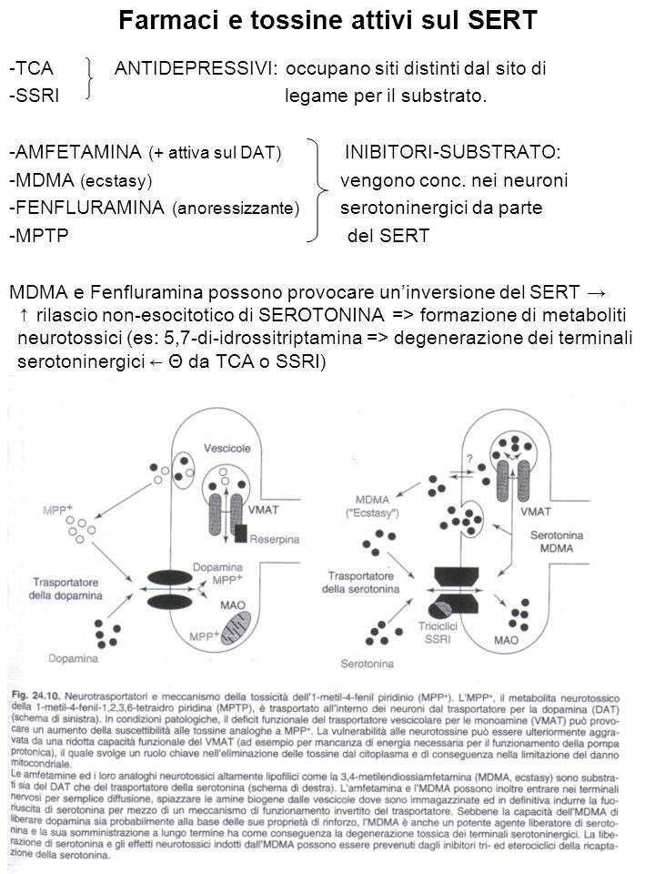 Farmaci e tossine attivi sul SERT -TCA ANTIDEPRESSIVI: occupano siti distinti dal sito di -SSRI legame per il substrato. -AMFETAMINA (+ attiva sul DAT