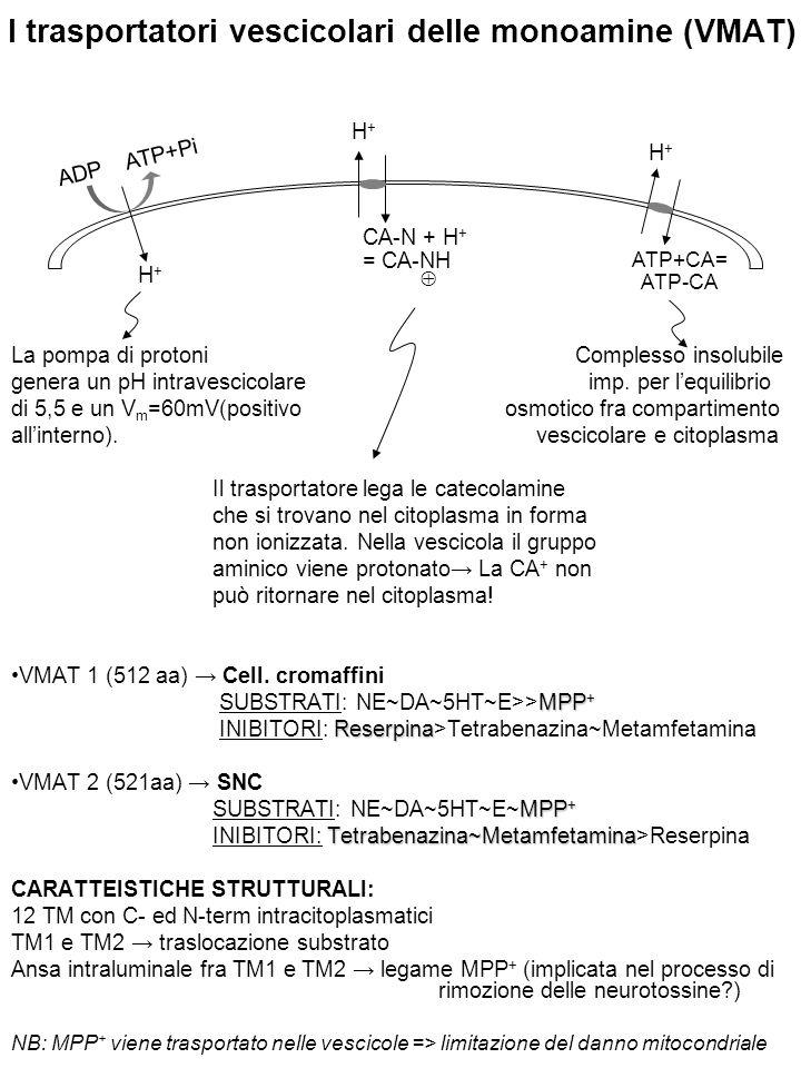 I trasportatori vescicolari delle monoamine (VMAT) La pompa di protoni Complesso insolubile genera un pH intravescicolare imp. per l'equilibrio di 5,5