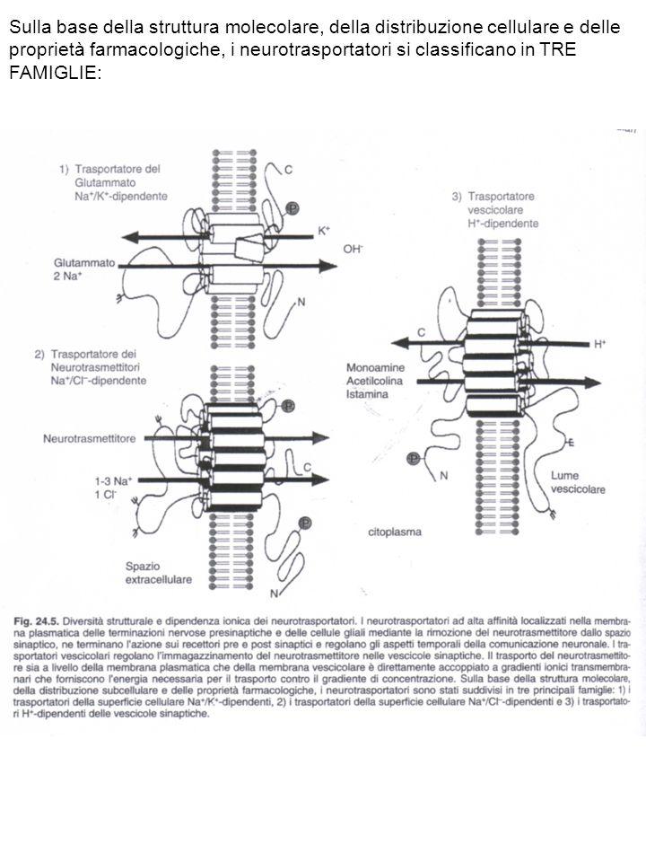 Sulla base della struttura molecolare, della distribuzione cellulare e delle proprietà farmacologiche, i neurotrasportatori si classificano in TRE FAM
